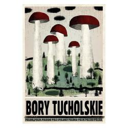 Bory Tucholskie, postcard...