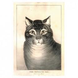 Ulubiony Kot, pocztówka,...